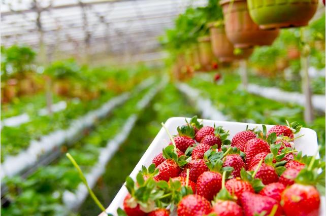 estudio comida ecológica